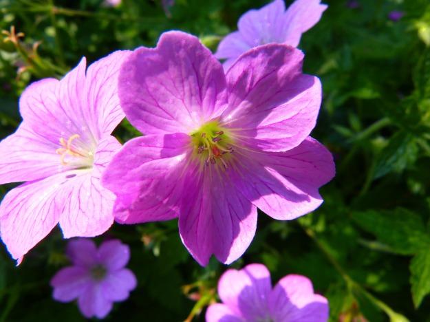 Flower ballerina tutu